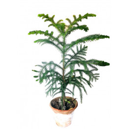 Aha Christmas Tree Ornamental Outdoor / Indoor
